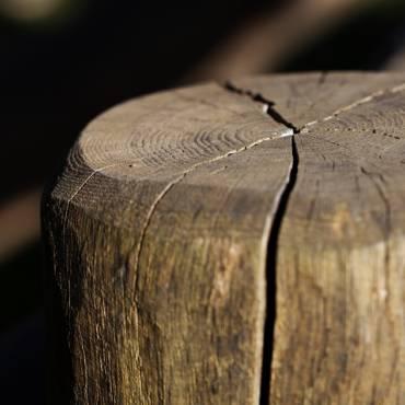 La fessurazione del legno.